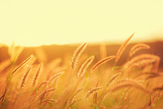Sunset Field, Beautiful Vibrant Color Stock Photography