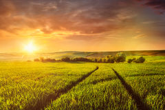 Sunset in field Royalty Free Stock Image