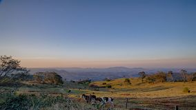 Sunset in the countryside. Sunset in the field with cattle grazing Royalty Free Stock Photo