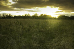 Sunset field clouds. Field with the sun just below the treeline at sunset Royalty Free Stock Photo