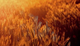 Sunset field Stock Images
