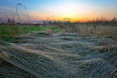 Sunset field Stock Photography