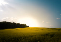 Sunset in field with flowers. Blue sky and clouds. Royalty Free Stock Images