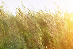 Sunset in a field of grass Royalty Free Stock Images