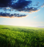 Sunset, Field of green grass and blue cloudy sky Royalty Free Stock Photos