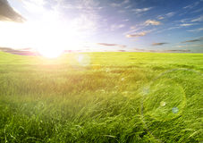 Sunset field of green grass Royalty Free Stock Image