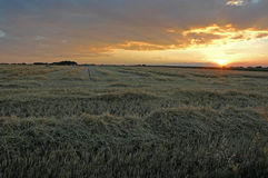 Sunset on field. Sunset on harvested barley field royalty free stock image