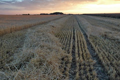 Sunset on field. Sunset on harvested barley field royalty free stock photos