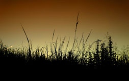 Sunset in the field Royalty Free Stock Photo