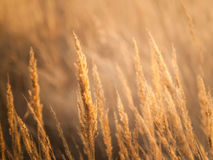 Sunset in field Royalty Free Stock Photo