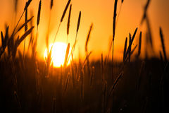 Sunset in the field Stock Image