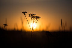 Sunset in the field Royalty Free Stock Images