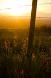 Sunset in a field. In Somerset West, South Africa, with a boundary fence post and paterson's curse flowers royalty free stock image