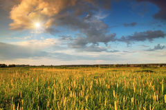 Sunset on the field Stock Photography