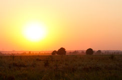 Sunset in a field Royalty Free Stock Photos