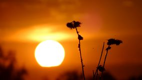 Sunset in the field. Summer nature Stock Images