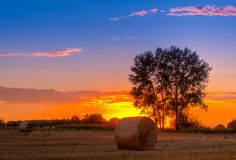 Sunset field, tree and hay bale Stock Photo