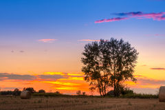 Sunset field, tree and hay bale Royalty Free Stock Image