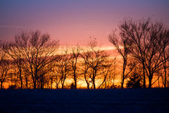 Sunset in a field. Trees and a field are silhouetted by a gorgeous orange and purple sunset Royalty Free Stock Photography