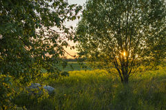 Sunset at field. Sunset with two trees at field Royalty Free Stock Photos