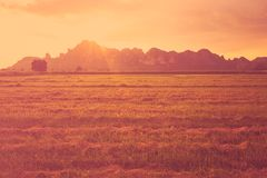 Sunset field Royalty Free Stock Photography