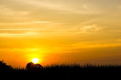 Sunset. In the fields Stock Photos