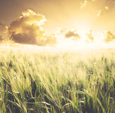 Sunset fields Royalty Free Stock Photography