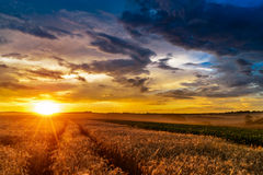 Sunset in fields in summer Royalty Free Stock Image