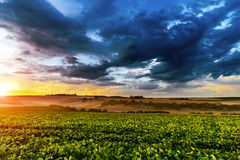 Sunset in fields in summer Royalty Free Stock Photos