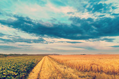 Sunset in fields in summer Stock Images