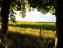 Sunset fields. Sunset trees view sunlight royalty free stock image