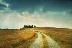 Fields of Tusscany Stock Image