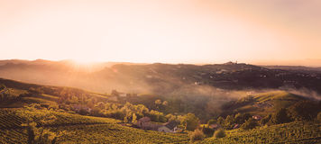 Sunset in the fields with vineyards. In Italy, Piedmont royalty free stock image
