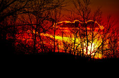 Sunset. A fiery red & orange sunset through bare trees Stock Image