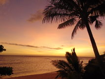 Sunset. In fiji with palm trees Royalty Free Stock Photography