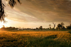 Sunset among fileds. Sunset light and dusk among fields Stock Image