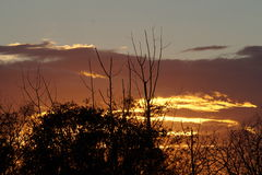 Sunset. Firery orange sunset behind the siloites of bushes and small trees Royalty Free Stock Photo