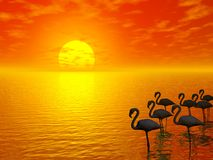 Sunset and flamingos vector illustration