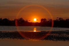 Sunset with flamingos Stock Photography