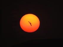Sunset Flight Royalty Free Stock Photo