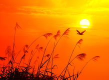 Sunset with flighting bird Royalty Free Stock Images