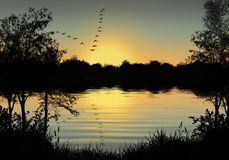 Sunset with flock of birds . Sunset with trees and flock of birds Royalty Free Stock Photography