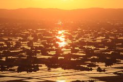 Sunset at flooded rice field Stock Image