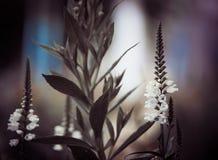 Sunset flower Stock Photo
