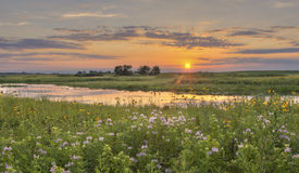 Sunset at Flower Field Royalty Free Stock Images