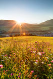 Sunset on flower field Royalty Free Stock Images