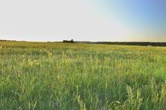 Sunset flower field Stock Image