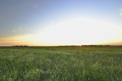 Sunset flower field Royalty Free Stock Photography