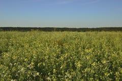 Sunset flower field Stock Photo