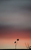Sunset with flower Stock Photos